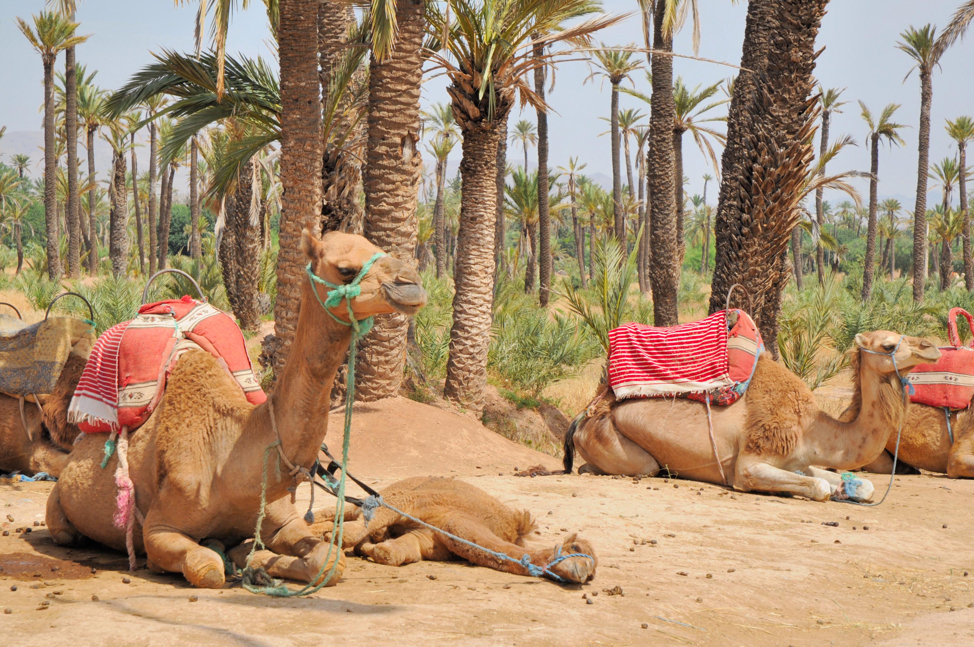 la_palmeraie_de_marrakech_707