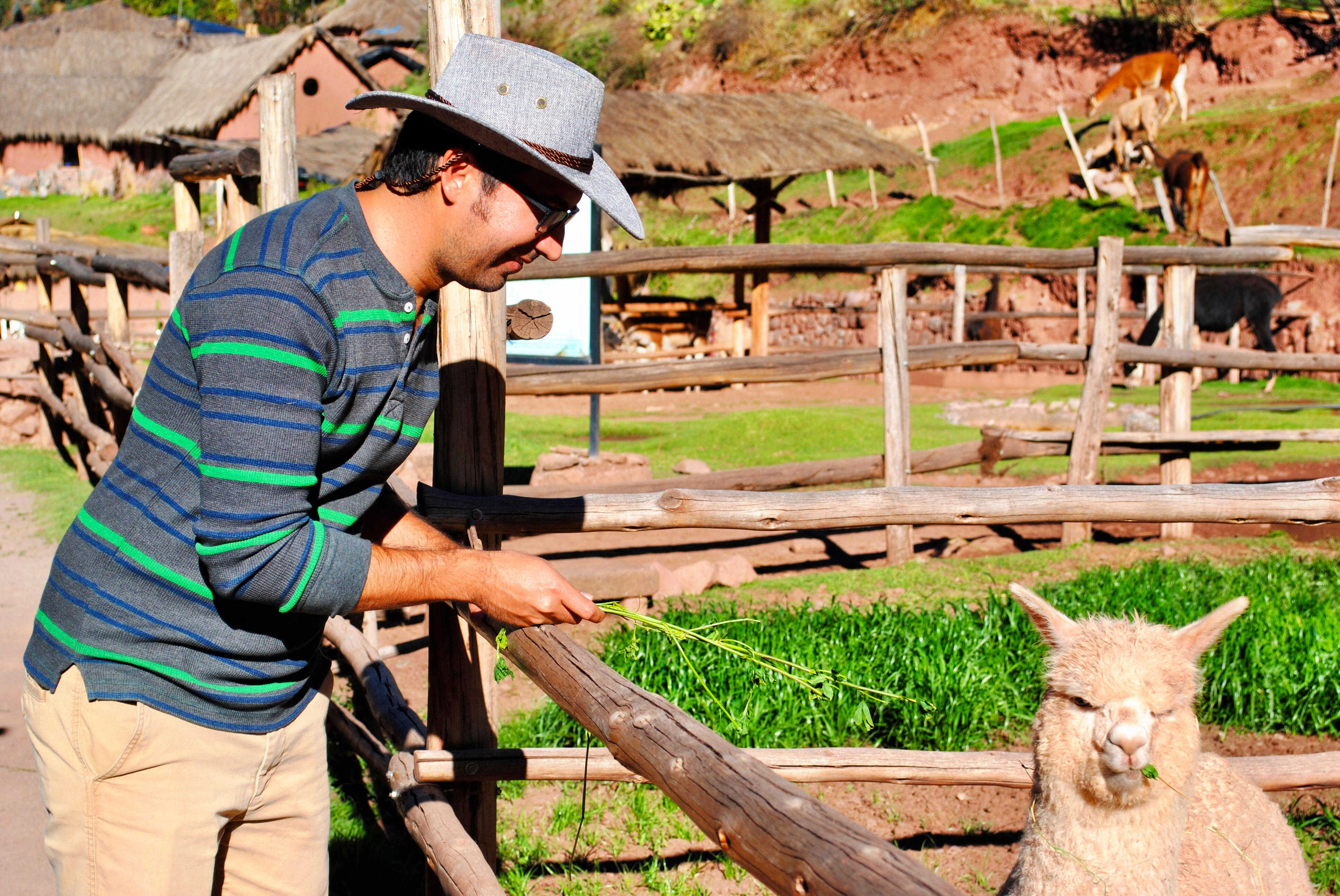 awana-kancha-alpaca-farm