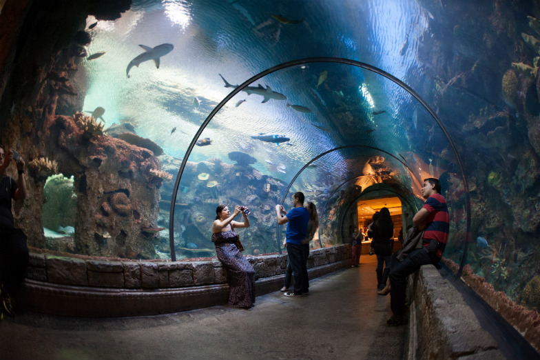 5-best-indoor-attractions-for-escaping-the-las-vegas-heat-c8a03162add74d3ca94fefe7a0da5f13-2