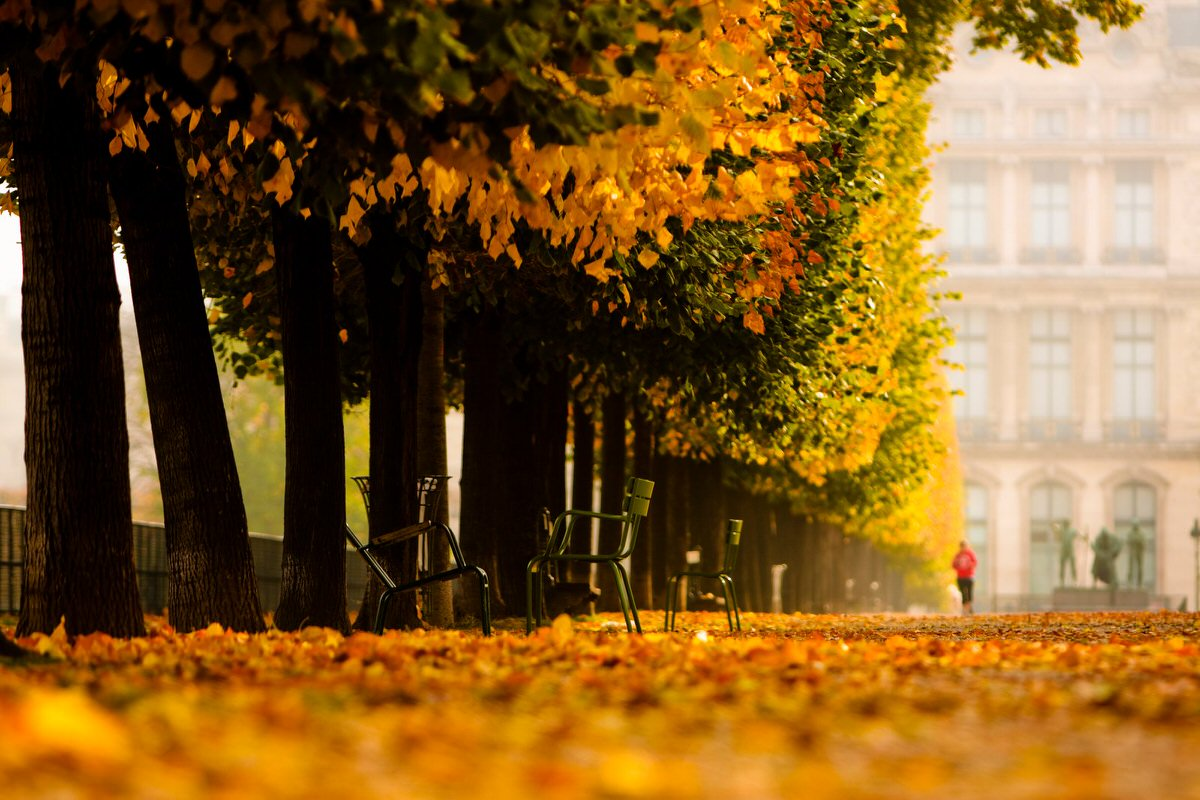 Autumn in Les Tuilleries in Paris