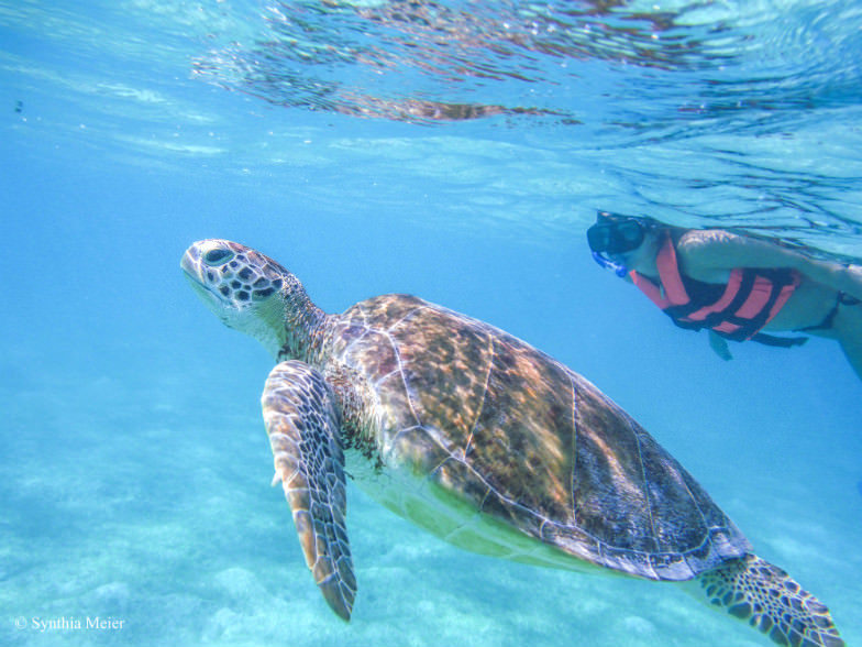 Swim with marine turtles in their natural environment.
