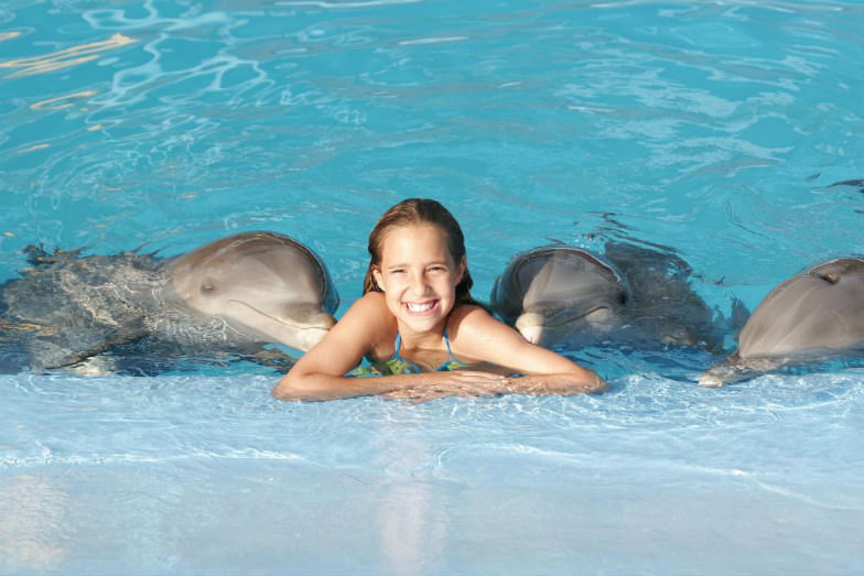 Swim with dolphins at Dolphin Island Park