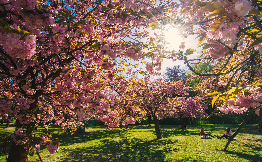 Where to go in Europe this spring? Parc de Sceaux in Paris is best for cherry blossoms.