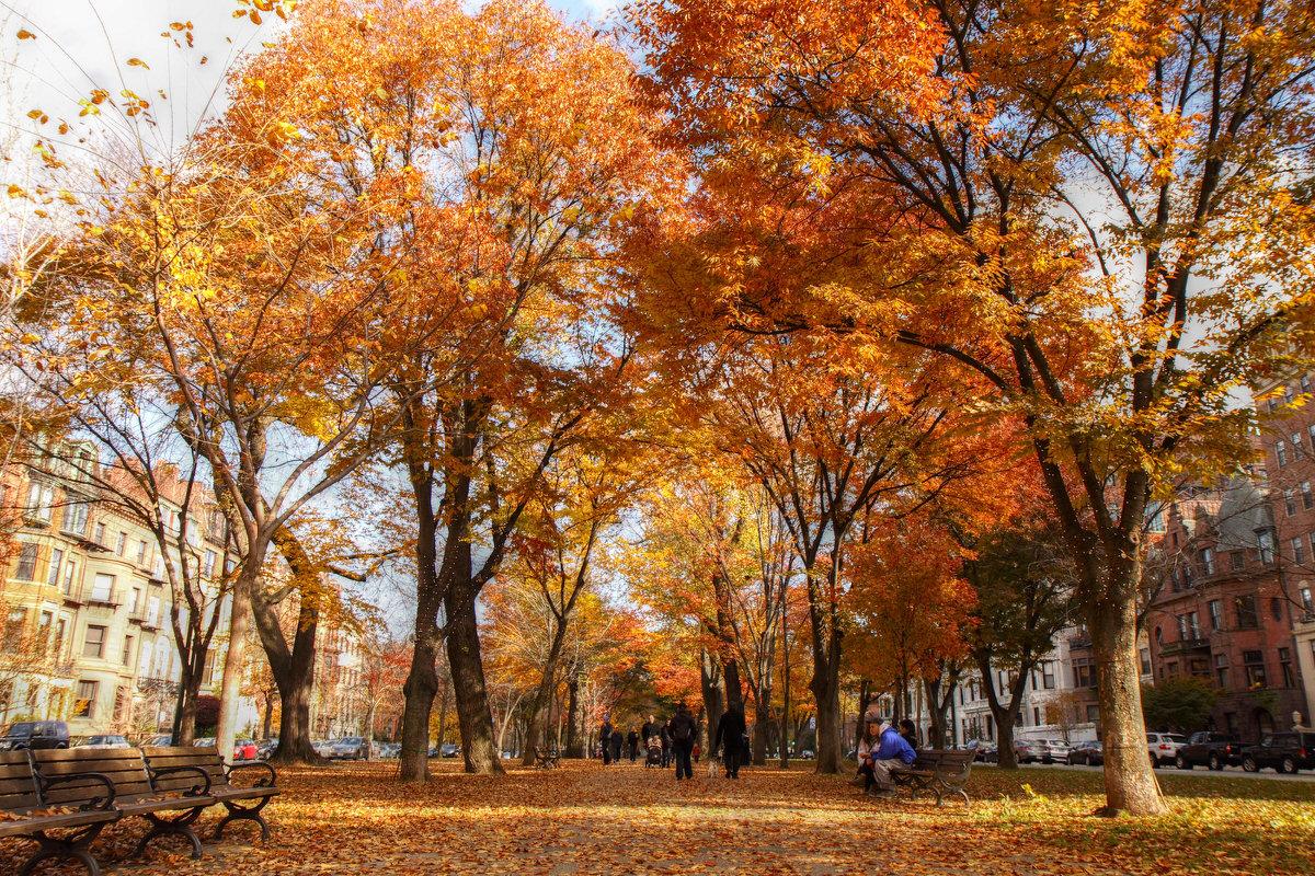 Fall folliage in Boston