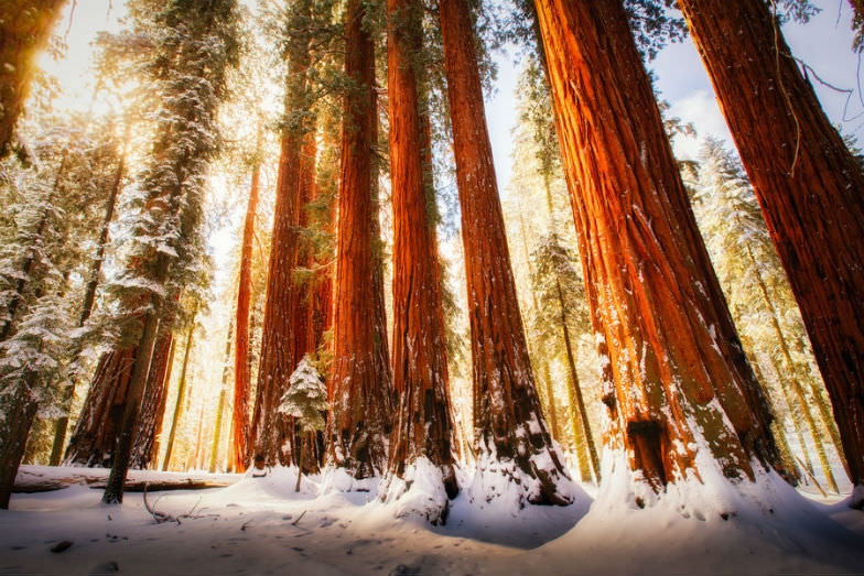 Sequoia National Park in the snow