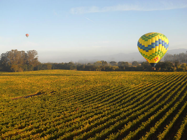 Fly over the vineyards in Sonoma County