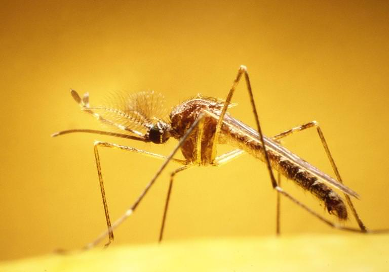 You'll find mosquitoes in the U.S., Caribbean, and Central and South America.