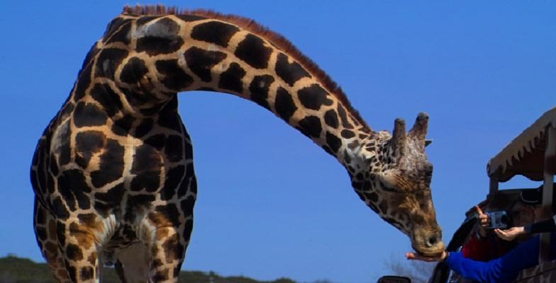 best safari parks in the U.S.