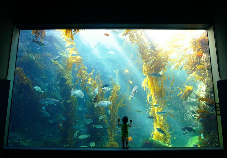 Birch Aquarium in La Jolla, California
