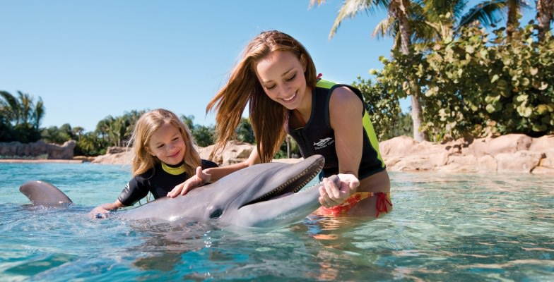swim with dolphins in Florida