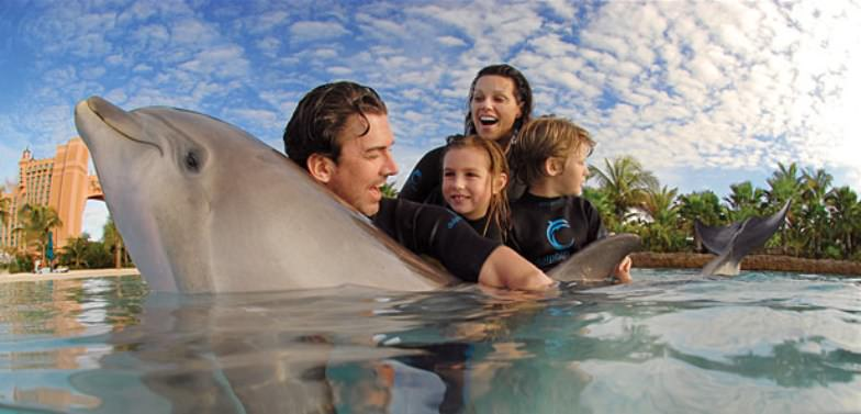 Shallow water interactions at Dolphin Cay