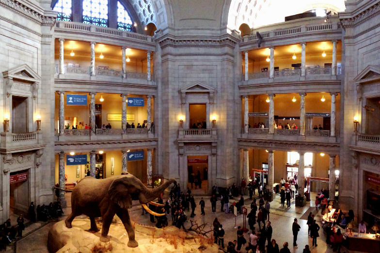 American Museum of Natural History in New York City