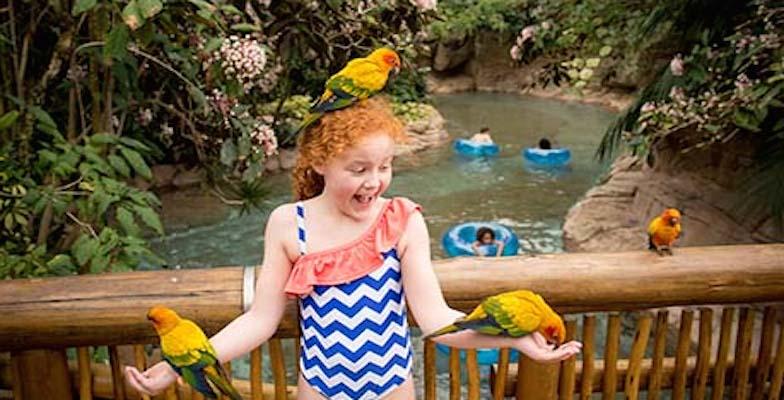 New US Water Parks: Roa's Aviary
