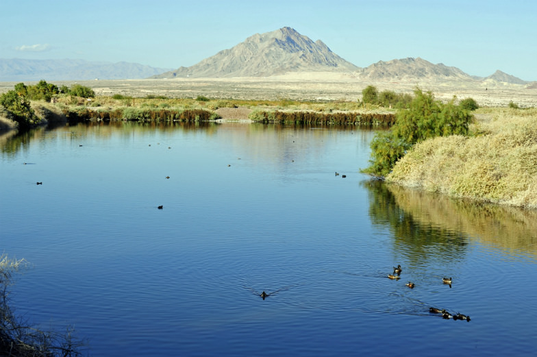 Henderson Bird Preserve in Henderson, Nevada