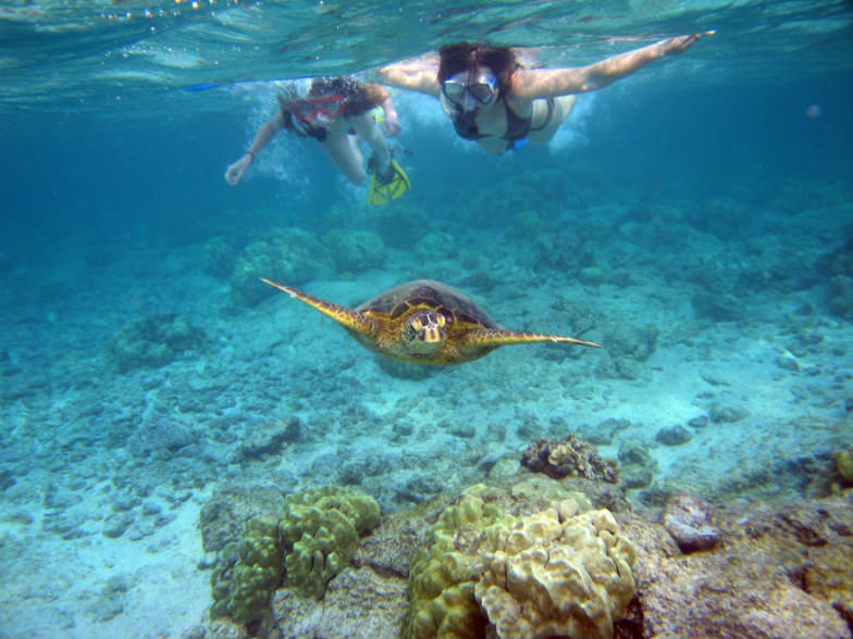 Snorkeling in Kailua-Kona