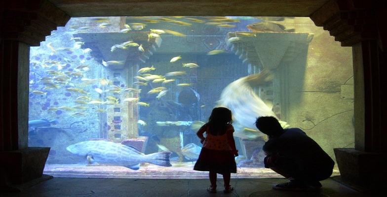 Top Family Resorts Atlantis