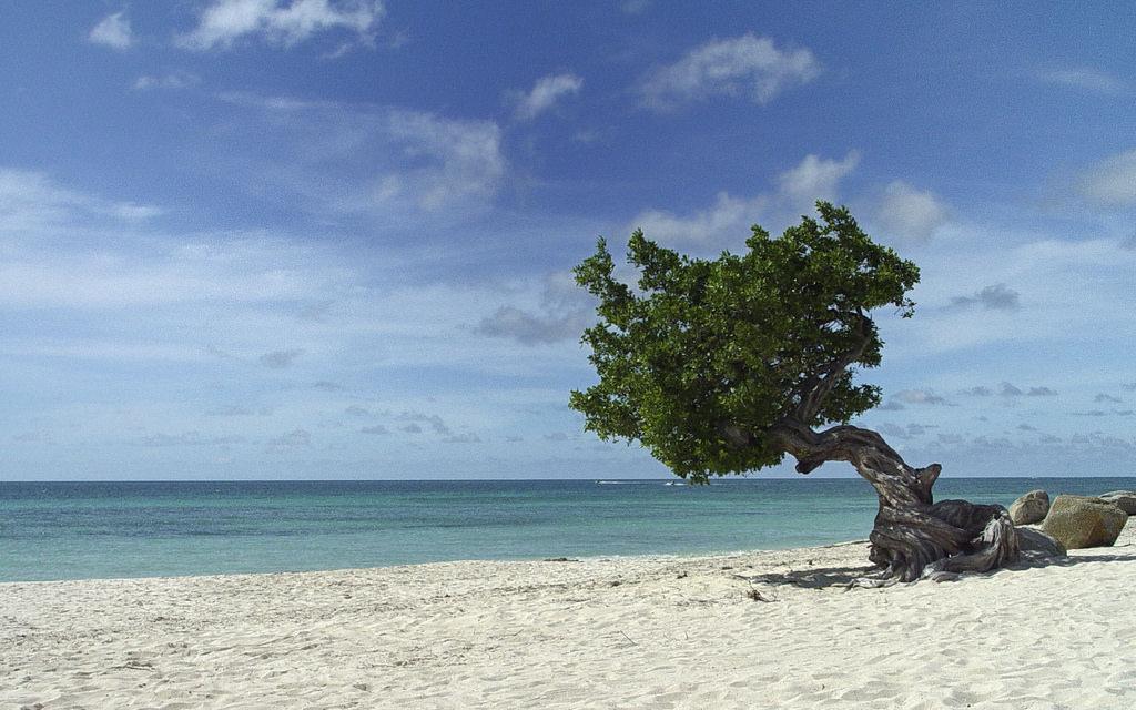 Aruba's Eagle Beach is one of Aruba's best family-friendly attractions.