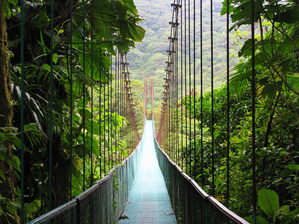 You must visit Monteverde Cloud Forest Reserve when you're in Costa Rica.