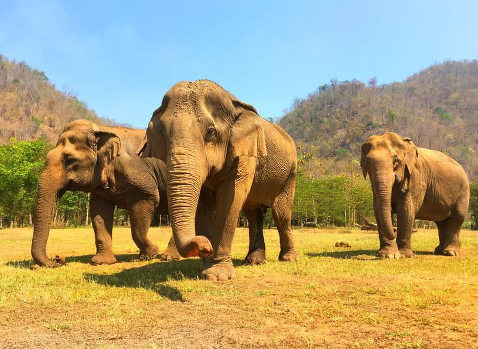 Chiang Mai's Elephant Nature Park is a great place for exposing the kids to cruelty-free animal interactions.