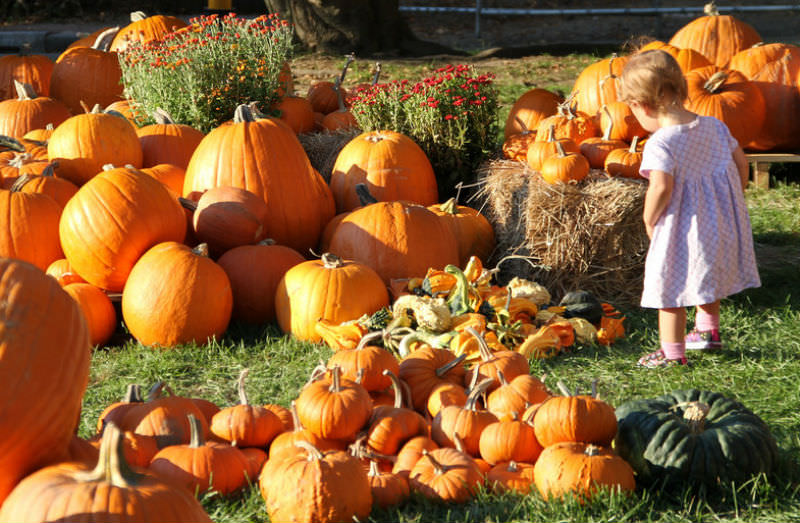 Reconnect with the kids by taking them to some of the best harvest festivals out west.