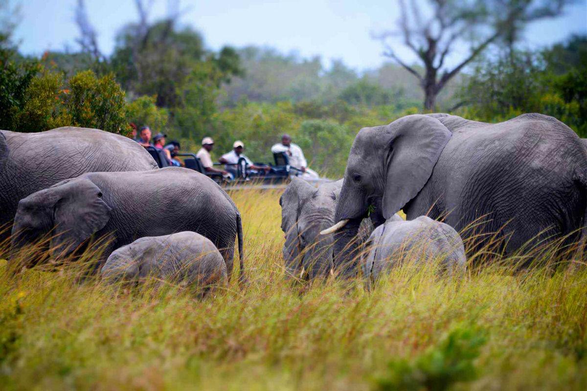 Elephants in Sabi Sands