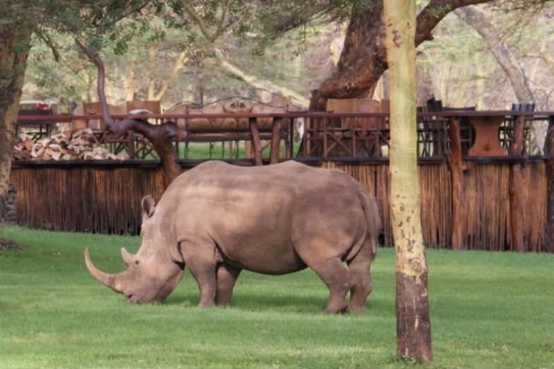 Rhino in Sirikoi