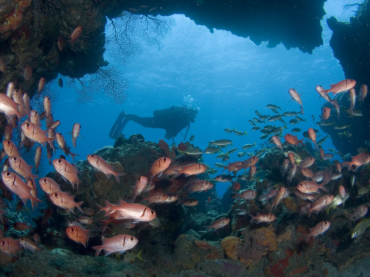 This year, visit Dominica and enjoy its amazing scuba diving opportunities.