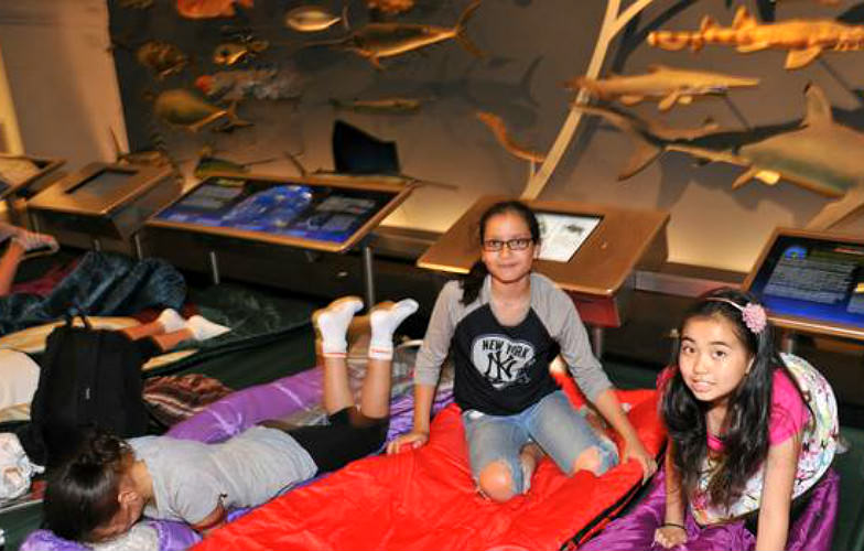 American Museum of Natural History sleepover