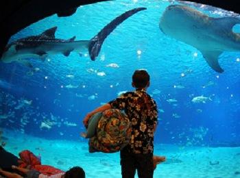 7 Amazing American Aquariums for Families
