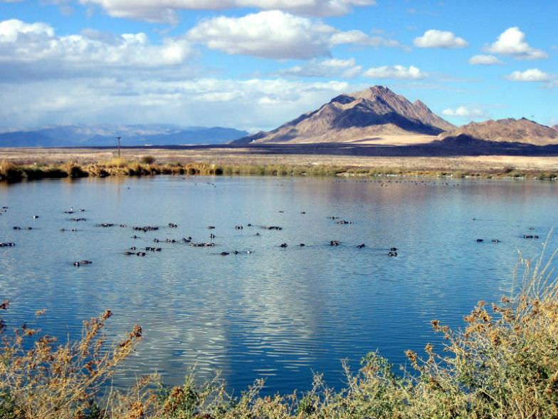Bird Preserve in Henderson, Nevada