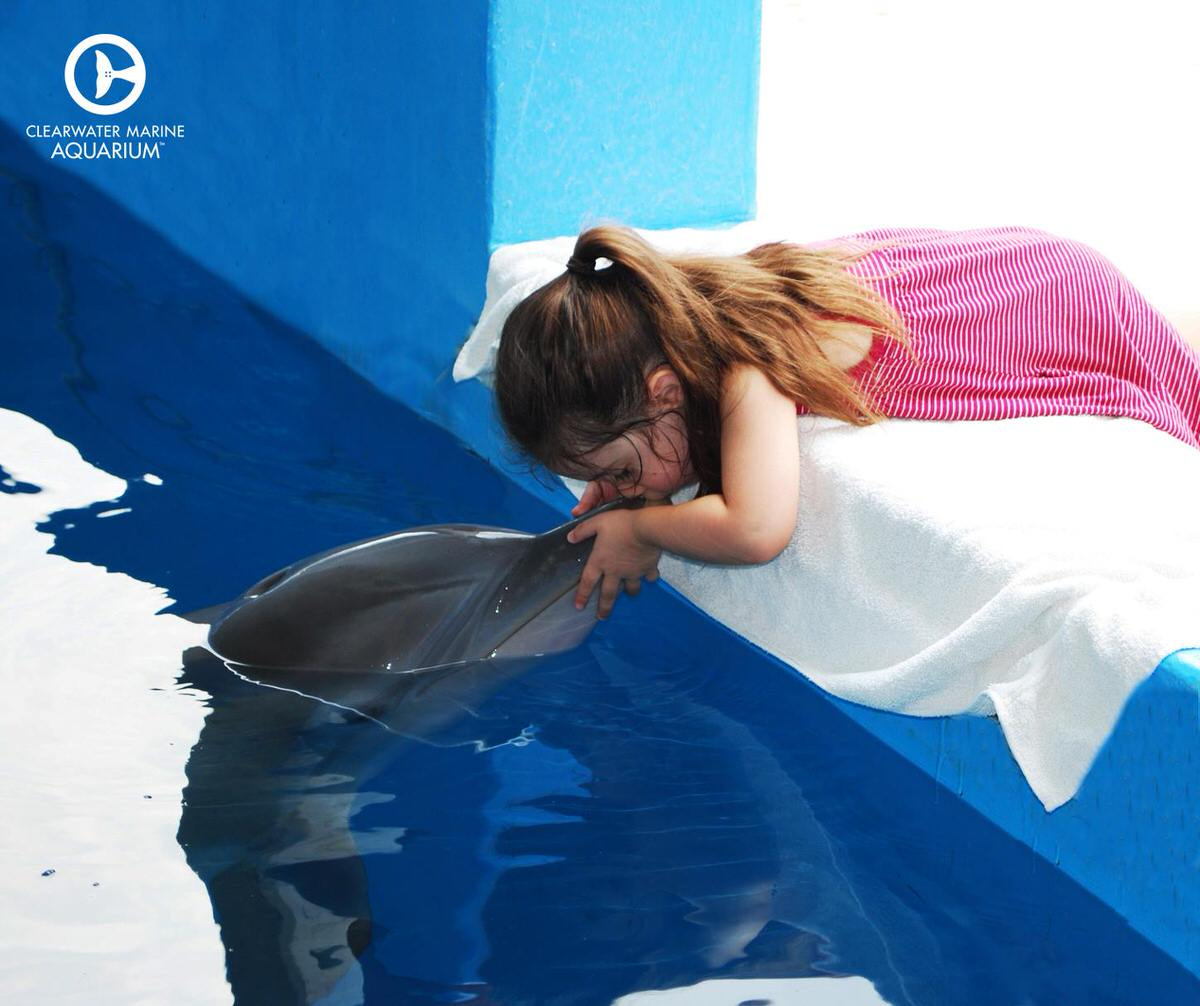 Dolphin interactions at the Clearwater Marine Aquarium