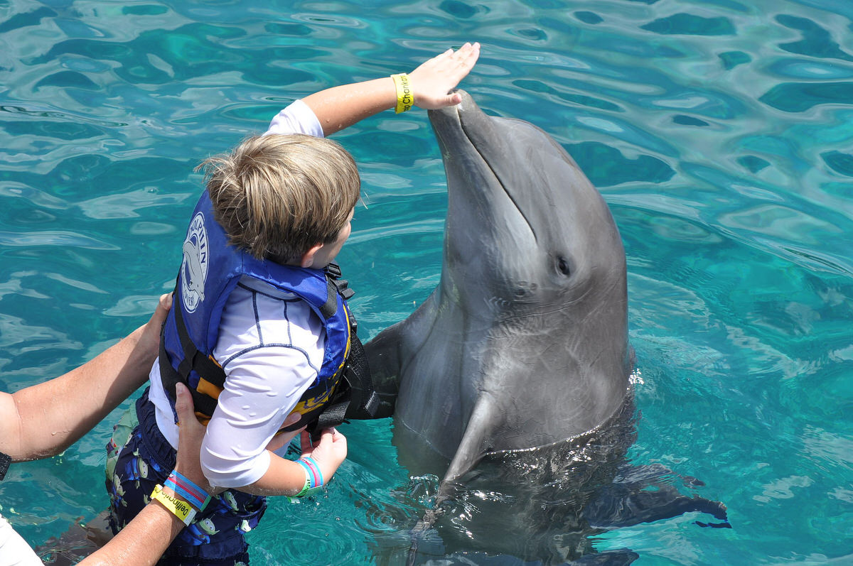 Swimming with dolphins: good or bad?