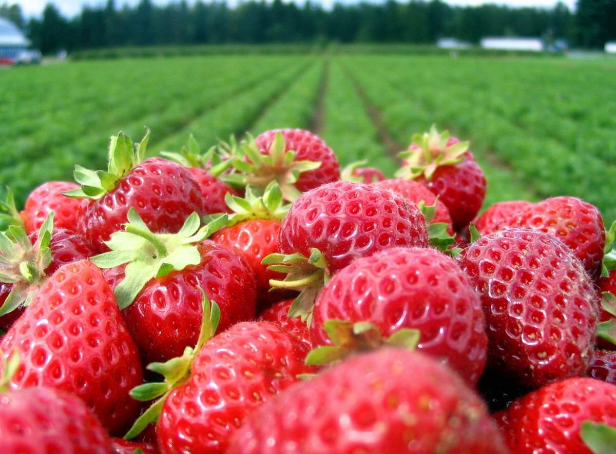 Stop by Oxnard's California Strawberry Festival during your trip in Ventura.