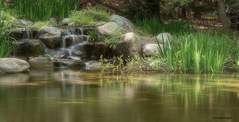 Kid-friendly Botanical Gardens: Descanso Gardens