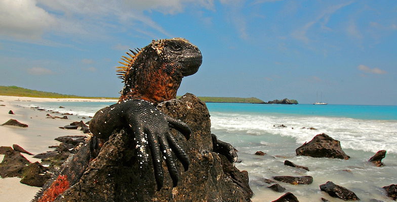 Alternative Cruises: The Galapagos Islands