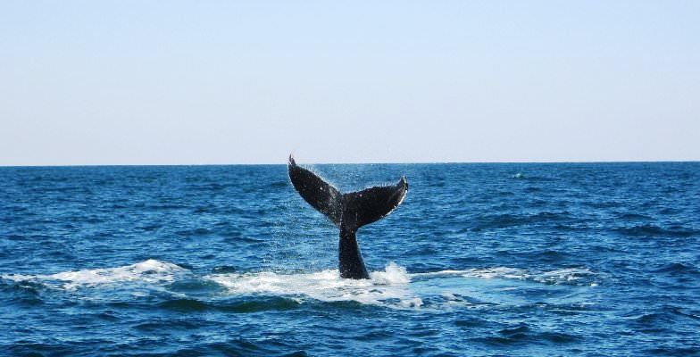 Presidents Week deal: Virginia Beach whale watching