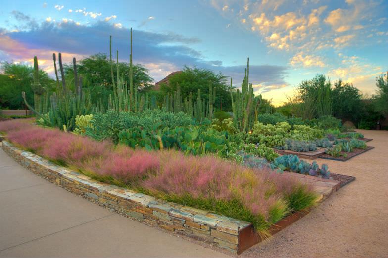 Splendor at the Desert Botanical Garden