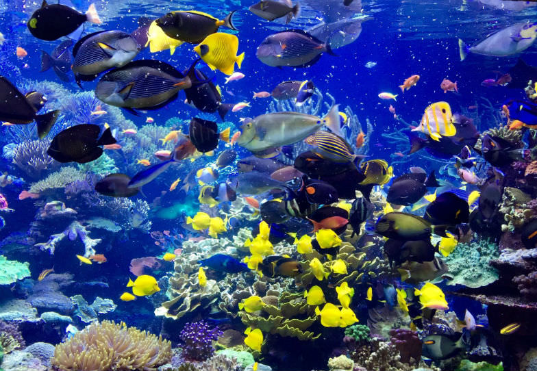 See colorful fish and many others at the Long Island Aquarium.