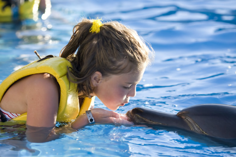 Encounter Dolphins with these amazing deals