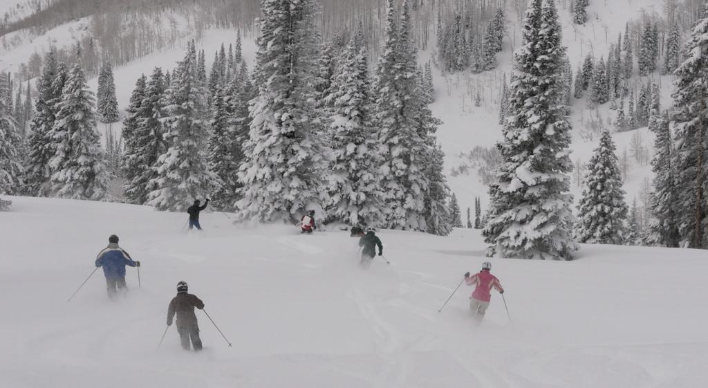 Skiing Through a Glade