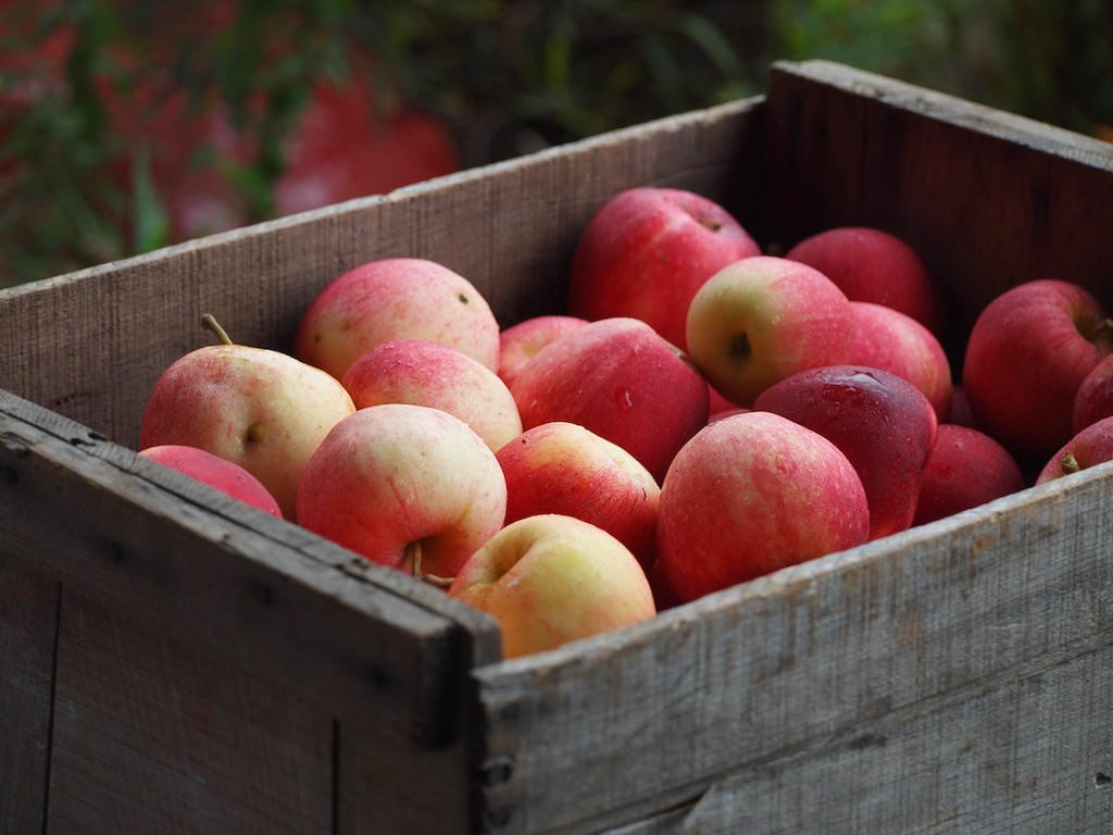 Apple picking is only some of the best fall activities to do with kids in North Georgia.