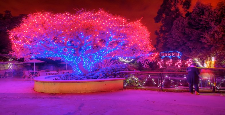 best holiday zoolight celebrations at zoos